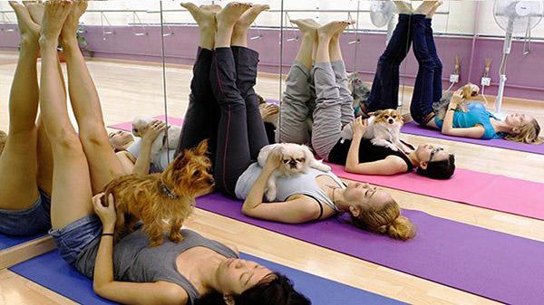 Дог йога